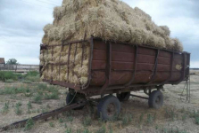 Два жителя Павлодарской области по неосторожности упали с высоты