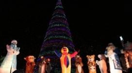 Новогодние елки зажгли в городах Казахстана