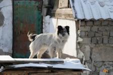 Бродячие собаки стали угрозой для жителей Павлодара