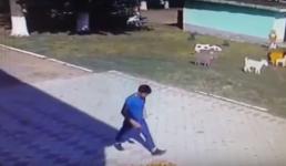 Павлодарская полиция разыскивает уличного грабителя