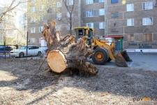 В Павлодаре целый год коммунальщики не могли убрать выкорчеванный пень