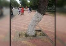 Аким города объяснил, почему газоны на улице Ленина заменили плиткой