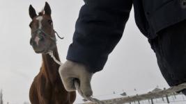 Кражу лошадей по горячим следам раскрыли павлодарские полицейские