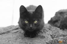 Павлодарские коты (фото)