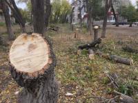 В Павлодаре взамен 51 спиленного дерева высадят газонную траву