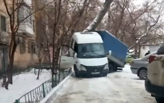 """В павлодарском акимате прокомментировали """"борьбу"""" дерева с """"ГАЗелями"""""""