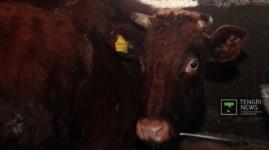 """""""КазАгроФинанс"""" подает иск в суд на поставщика зараженного австрийского скота"""