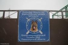 Пять новых собак пополнили кинологическую службу павлодарской полиции