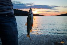 В Павлодарской области предлагают разрешить ловить больше пяти килограммов рыбы за дополнительную плату