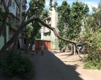 Жители дома по улице Айманова неделю не могут добиться, чтобы в их дворе убрали упавшее дерево