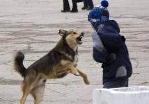 Жителя Аксу привлекли к ответственности за то, что его собака укусила ребенка