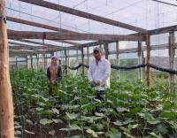 Начинающая предпринимательница открыла в Павлодарском районе теплицу благодаря господдержке