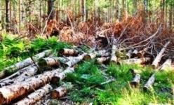 За 9 месяцев павлодарскими полицейскими выявлено 545 нарушений природоохранного законодательства