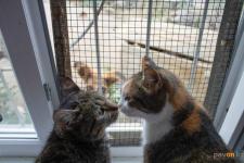 Миллион тенге выделено на льготную стерилизацию домашних животных в Павлодаре