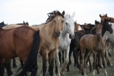 О развитии животноводства