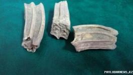 В Павлодаре найдены зубы неизвестного науке животного