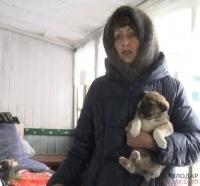 Жительница Павлодара просит сохранить жизнь 15 собакам и найти им кров