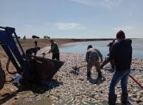 В департаменте экологии Павлодарской области озвучили итоги исследований водоема, где случился мор рыбы