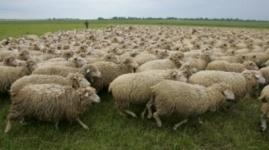 Бруцеллез обнаружили у ста животных в Карагандинской области