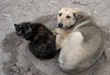 У бездомных животных появится дом