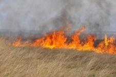 В Павлодарской области из-за жары загорелась степь