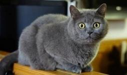 В России собака спасла жизнь закопанной заживо кошке