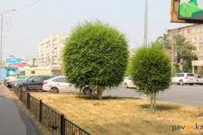 В Павлодаре занялись фигурной обрезкой кустарников