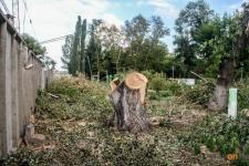 В Павлодаре займутся обрезкой аварийных деревьев, которые представляют опасность для населения