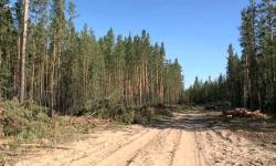 Генеральный директор резервата Ертiс орманы подозревается в растрате