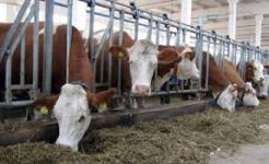 В Павлодаре построят супермаркет для фермеров