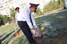 Павлодарские полицейские, ровесники Конституции, высадили аллею памяти