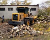 Благоустройство = снос деревьев?