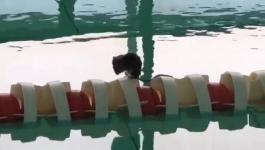 Павлодарский бассейн приостановил свою работу из-за полевой мыши