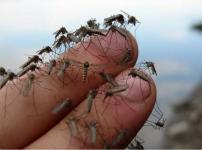 """Свои предложения по подсчету комаров объяснили в """"Казахтелекоме"""""""
