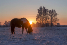 В Прииртышье созданы группы быстрого реагирования для борьбы со скотокрадами