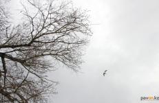 Холодный антициклон продолжит влиять на погоду в Павлодаре
