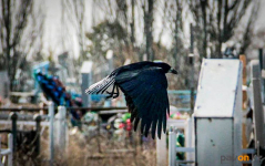 Аким Павлодара сообщил о том, что на кладбище горожане могут поехать на личном транспорте