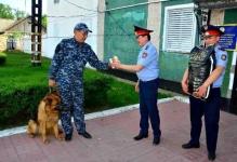 В Прииртышье полицейская собака разыскала вора сотового телефона