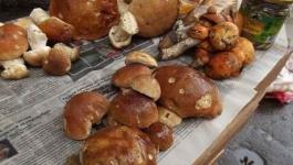 В Казахстане запретили торговать на рынках грибами и пирожками
