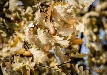 500 саженцев дуба планируют высадить павлодарские школьники