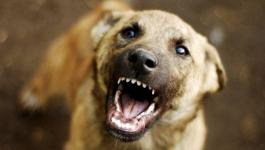 Павлодарка отсудила 80 тысяч тенге за то, что собака укусила ее ребенка