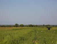 Запретить выделять земли иностранцам в пограничной зоне планируют в Казахстане