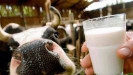 Поднять закупочные цены на молоко с частных подворий предложили в Павлодарской области