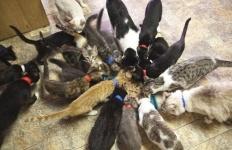 Желающие завести кошку должны будут спрашивать разрешение у соседей