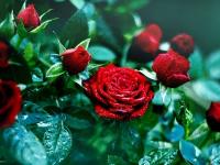 Ко Дню знаний в Экибастузе вырастили миллион алых роз