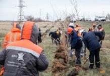 Павлодарские алюминщики внесли свойвклад в создание зеленого пояса для города