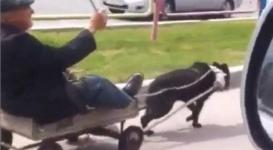 Житель Семея передвигается по дорогам на собаке