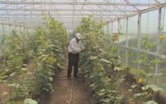В настоящий оазис превратил свой двор пенсионер из Павлодарской области
