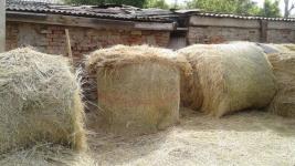 52 тюка сена два жителя Прииртышья украли у земляка