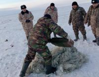 Рыбу и раков освободили госинспекторы из браконьерских сетей в водохранилище Павлодарской области